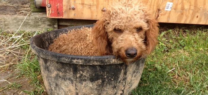 cordy feed tub